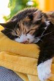 轻松的多彩多姿的猫 免版税库存照片