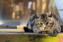 轻松的猫 免版税库存图片