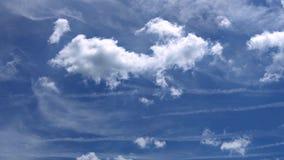 松的白色覆盖蓝天美好的天4K录影决议 股票录像