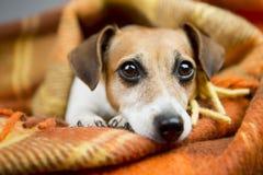 轻松的美丽的狗 库存图片