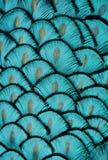 绿松石羽毛 免版税图库摄影