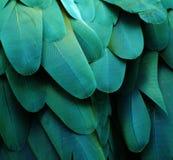 绿松石金刚鹦鹉羽毛 免版税图库摄影