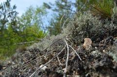 绿松石青苔 库存照片