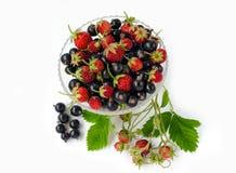松草莓和黑醋栗在一块玻璃在白色背景 使用束草莓无核小葡萄干和叶子  库存图片