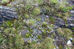 板岩岩石背景纹理 图库摄影