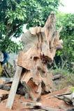 板材木切口 库存图片