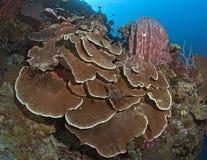 板材珊瑚和海绵在墙壁礁石 库存照片