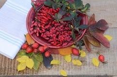 板材用伏牛花莓果在老委员会的在薄纸和秋叶和疏散莓果野玫瑰果旁边 库存照片