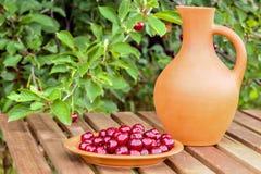 板材用樱桃和一个瓶子在庭院里 库存图片