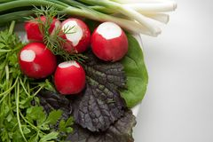 板材的图片用健康食物荷兰芹,庭院萝卜,蓬蒿 图库摄影