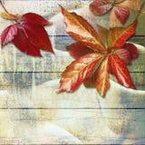 板条秋天难看的东西木背景与五颜六色的叶子的 库存照片