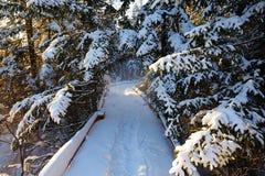板条路和积雪的分支在森林里 免版税图库摄影