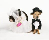 极乐婚姻了 免版税库存图片