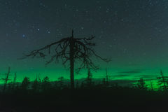 极光borealis,卡累利阿,俄罗斯 免版税库存照片