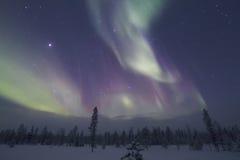 极光Borealis, Raattama, 2014年 02 21 - 26 图库摄影