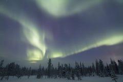 极光Borealis, Raattama, 2014年 02 21 - 30 库存照片