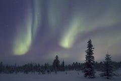 极光Borealis, Raattama, 2014年 02 21 - 38 库存照片