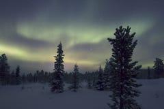 极光Borealis, Raattama, 2014年 02 21 - 35 图库摄影