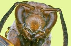 极其宏观纸质黄蜂 免版税图库摄影