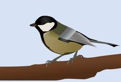 极大的北美山雀 免版税库存照片