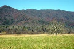 极大的发烟性山的国家公园 免版税图库摄影