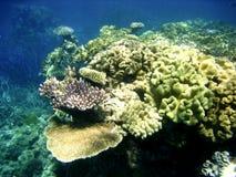 极大的堡礁水下的场面  库存照片