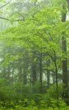 极大的横向mtns nat公园发烟性春天tn 免版税图库摄影