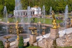 极大的级联 它包括许多喷泉和用古铜色镀金面雕塑装饰 Petergof,圣彼德堡 库存照片