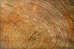极大的纹理结构树木头 库存照片