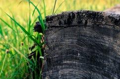 极大的纹理结构树木头 免版税库存图片