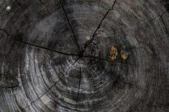 极大的纹理结构树木头 图库摄影