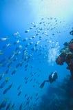 极大障碍的潜水 免版税库存图片