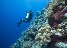 极大障碍的潜水 免版税库存照片