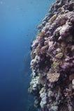 极大障碍的潜水 库存图片