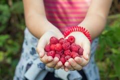 极少数在一个小女孩的棕榈的莓 免版税库存图片