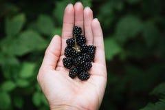 极少数狂放的黑莓 库存照片