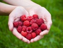 极少数莓 免版税库存图片