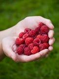 极少数莓 库存照片