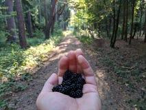 极少数黑莓 库存照片