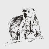 极性熊的看起来 传染媒介剪影 凹道现有量纸张水彩 图库摄影