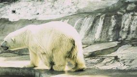 极性熊的看起来 股票视频