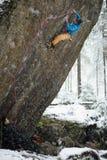 极端冬季体育 攀登与套住的年轻人一个岩石 绳索上升 免版税库存图片