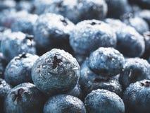 极端接近的蓝莓 图库摄影