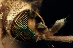 极端放大-蚊子头 免版税图库摄影