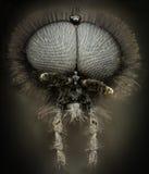 极端放大-黑黄蜂画象 图库摄影