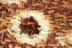 极端放大-蝴蝶翼在显微镜下 免版税库存图片