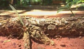 结构庄园昆虫本质实际s 库存图片