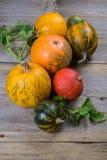 构成南瓜的不同的品种和颜色 免版税库存照片