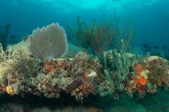 构成壁架礁石 免版税库存图片