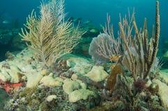 构成壁架礁石 库存图片